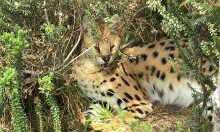 Tenikwa Wildlife Awareness Centre, The Craggs, Plettenberg Bay, RSA